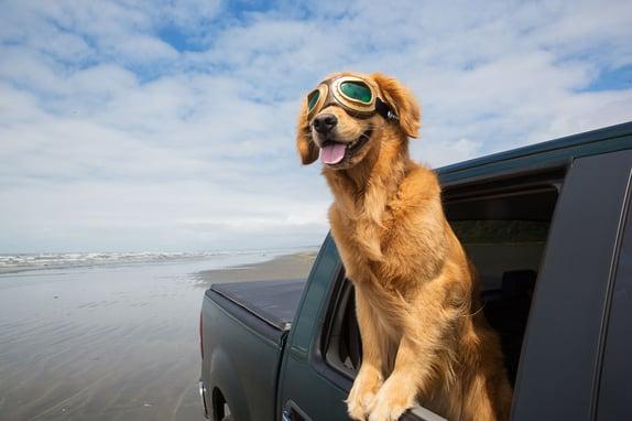 Vehicle Loan with dog